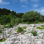 Environnement_Etude_impact_telesiege_bergers_SSMJ_Monts-Jura_4
