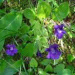 Environnement_Etude_impact_telesiege_bergers_SSMJ_Monts-Jura_5