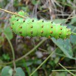 Environnement_Etude_impact_telesiege_bergers_SSMJ_Monts-Jura_6