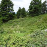 Environnement_Defrichement_Chemin-Pisteur_Chamrousse_03