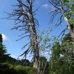 Environnement_Defrichement_Chemin-Pisteur_Chamrousse_04